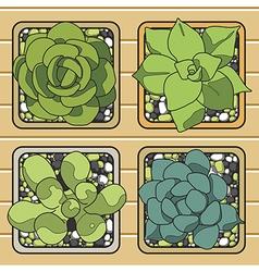 Cactus top view in the pots vector
