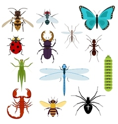 Cartoon isolated colorful insects set vector image