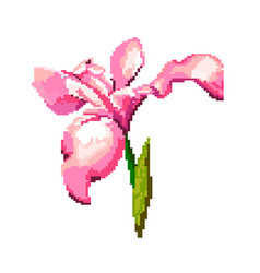 iris on a white background pixel of vector image