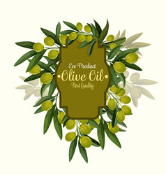 olives poster for extra virgin olive oil vector image