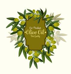 Olives poster for extra virgin olive oil vector