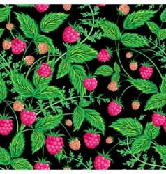 Raspberries seamless pattern with raspberry and vector