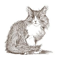 kitten drawing vector image