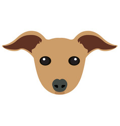 isolated italian greyhound avatar vector image