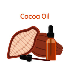 cocoa natural oil essential oil cosmetics vector image