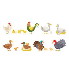 farm birds rural poultry yard inhabitants funny vector image