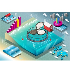Isometric Infographic of Breeding Oysters vector image