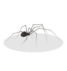 black spider icon halloween design vector image