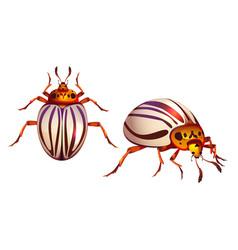 colorado beetle potato bug realistic striped pest vector image