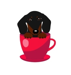 cute Dachshund dog in red teacup vector image