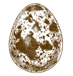 engraving quail egg vector image