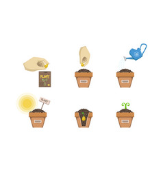 Plant growing stages set seedling gardening plant vector