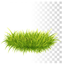 tussock of green grass vector image
