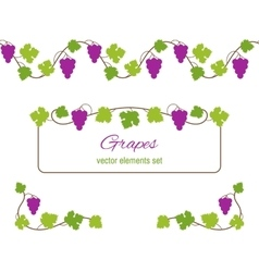 Design elements with bunches of grapes and vines vector image