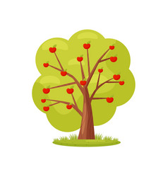 flat icon of big green tree with red apples vector image