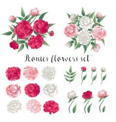 Flowers and Leaves Pink and White Peonies Floral vector