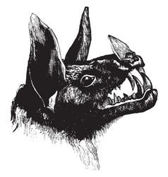 head of spectre bat vintage vector image
