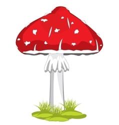 Mushroom fly agaric vector
