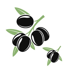 Olive branches with black olives vector