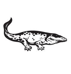 Prehistoric amphibian carboniferous tetrapod vector