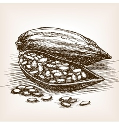 Cocoa beans sketch style vector image