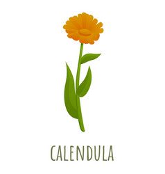 Calendula flower icon cartoon style vector