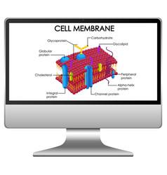 Cell membrane structure on computer desktop vector