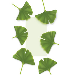 ginkgo-biloba backgrounds vector image