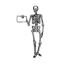 human skeleton holding blank sign or board vector image