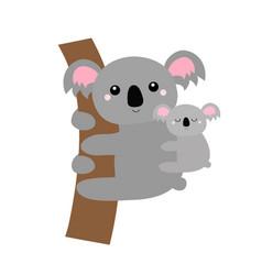 koala bear face head hanging on tree branch vector image