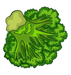 vegan broccoli icon cartoon style vector image