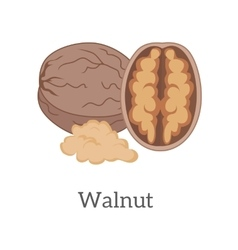 Walnut in Flat Style Design vector