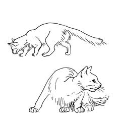 Set of sketch cats vector image vector image