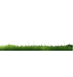 green grass border template grass on blank vector image