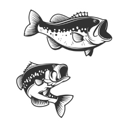 Sea bass fish silhouettes isolated on white vector
