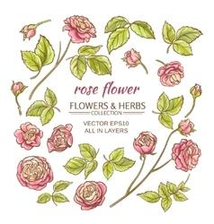 rose elements set vector image
