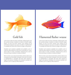 filamented flasher wrasse and gold fish posters vector image