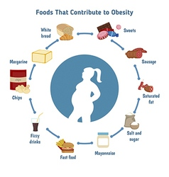 Foods that contribute to obesity vector image vector image