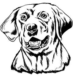 Labrador retriever black and white outline vector