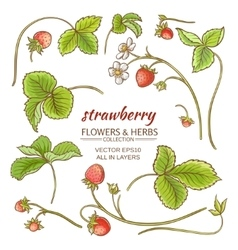 strawberry elements set vector image