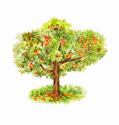 Watercolor apple tree isolated on white vector