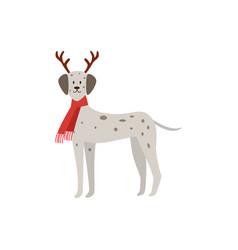 christmas dalmatian - dog wearing deer antlers and vector image
