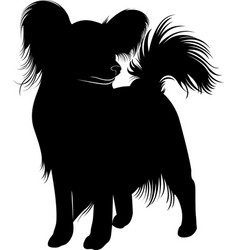 Papillon dog vector