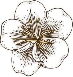 White apricot flower vector