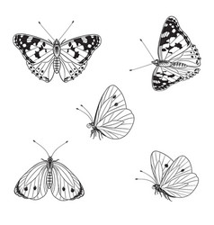 Butterflies set in monochrome line graphic vector