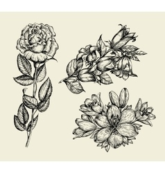Flowers Hand drawn sketch flower bell rose lily vector image