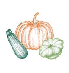 ink sketch squashes vector image