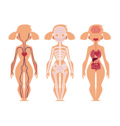 people internal organs anatomy structure vector image