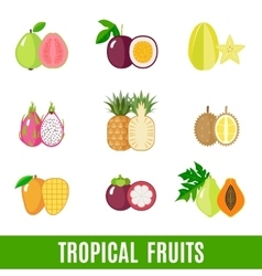 Set of flat tropical fruits vector image