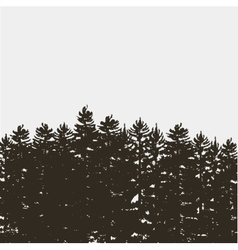 Black pine tree forest isolated on white grey vector image vector image